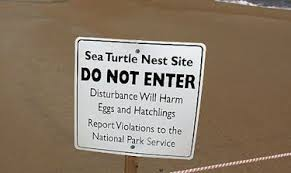 turtle-nest-site-sign