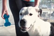 Video Outer Banks SPCA Pet of the Week: Swordfish