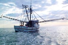 Path to rules on shrimp trawling is 'a marathon, not a sprint'