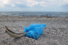 Repeal of OBX plastic bag ban approved by the state Senate