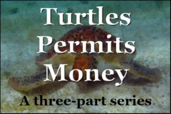 Turtles Permits Money A three-part series