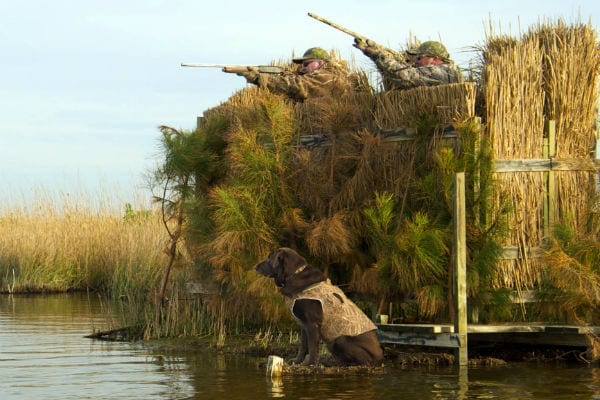 Opposition to Sunday waterfowl hunting creates odd alliances