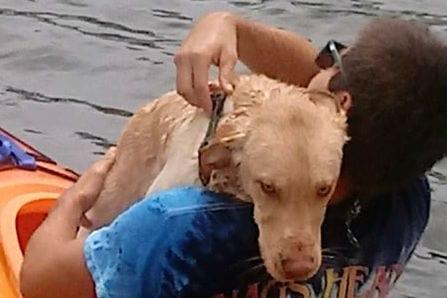 Kayaker saves dog struggling to swim in Colington Harbour