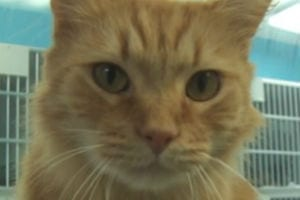 Outer Banks SPCA Pet of the Week: Tigger