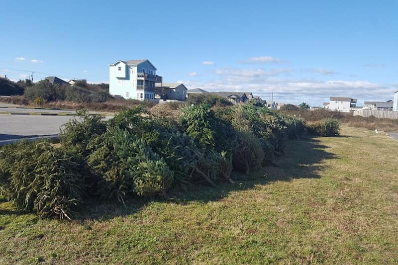 Better Beaches OBX seeking help moving old Christmas trees