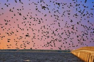 They're back! NCDOT taking steps to protect purple martins