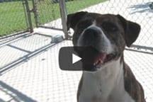 SPCA Pet of the Week: Sasha